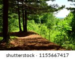 in the shade of coniferous... | Shutterstock . vector #1155667417