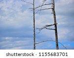dead trees. dead trees on... | Shutterstock . vector #1155683701