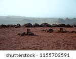 wolcanic geysers   steaming... | Shutterstock . vector #1155703591