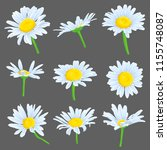 vector set of drawing daisy... | Shutterstock .eps vector #1155748087