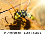 wasp on a wooden background... | Shutterstock . vector #1155751891