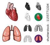 human organs cartoon black flat ...   Shutterstock .eps vector #1155771334