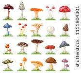Mushroom And Toadstool...