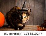 black cat on black wood... | Shutterstock . vector #1155810247