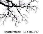 Leafless Branches Isolated On...