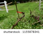 A Red Dragonfly On A Stick