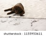 cute dog leaving muddy paw... | Shutterstock . vector #1155953611
