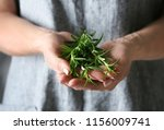 Woman Holding Fresh Rosemary ...