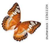 Orange butterfly flying