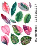 set of leaves on isolated white ... | Shutterstock . vector #1156161337