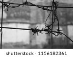 Small photo of barbed wire node