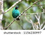 beautiful and colorful green... | Shutterstock . vector #1156230997