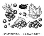black currant vector drawing.... | Shutterstock .eps vector #1156245394