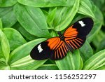 Stock photo heliconius melpomene postman butterfly common postman 1156252297