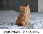 Stock photo tiny fluffy buff kitten sitting on striped blanket 1156271047