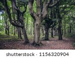 beech trees in swinoujscie town ... | Shutterstock . vector #1156320904