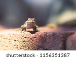 lizard on the rock  | Shutterstock . vector #1156351387