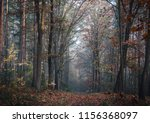 a path in deciduous forest in... | Shutterstock . vector #1156368097