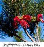 stunning west australian... | Shutterstock . vector #1156391467