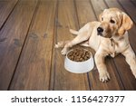 cute labrador dog on wooden... | Shutterstock . vector #1156427377