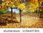 yellow leaves on autumn tree.... | Shutterstock . vector #1156437301
