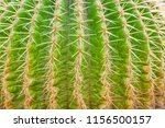 closeup of cactus. texture of... | Shutterstock . vector #1156500157