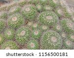 closeup of cactus. texture of... | Shutterstock . vector #1156500181