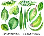 set of green tropical leaves on ... | Shutterstock . vector #1156549537