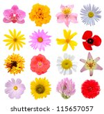 assortment flowers in america | Shutterstock . vector #115657057