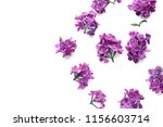 beautiful blossoming lilac on... | Shutterstock . vector #1156603714