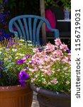 beautiful  summer garden with... | Shutterstock . vector #1156719031