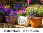 beautiful  summer garden with... | Shutterstock . vector #1156719037