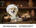 Dog Welsh Corgi Prepares...