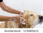A Dog Taking A Shower With Soa...