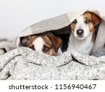 two dogs under the rug.... | Shutterstock . vector #1156940467