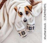 dog under a plaid. pet warms... | Shutterstock . vector #1156940491
