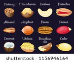 set of nuts poster in shell... | Shutterstock .eps vector #1156946164