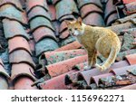tabby cat walking on an old... | Shutterstock . vector #1156962271