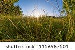 golden sunset behind a grass... | Shutterstock . vector #1156987501