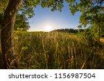 golden sunset behind a grass... | Shutterstock . vector #1156987504