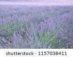 fields of lavender  lavandula... | Shutterstock . vector #1157038411