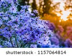 autumn background with blue... | Shutterstock . vector #1157064814
