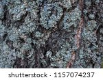 pine bark closeup with lots of... | Shutterstock . vector #1157074237