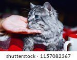 lazy lovely funny fluffy cat... | Shutterstock . vector #1157082367