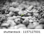 two stone pyramids and growing... | Shutterstock . vector #1157127031