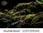 Beautiful Green Moss On The ...