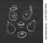 pear drawing vector hand drawn... | Shutterstock .eps vector #1157207494