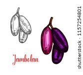 jambolan indian tropical fruit... | Shutterstock .eps vector #1157254801