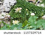 a beautiful island of water... | Shutterstock . vector #1157329714