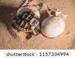 common tortoise baby is... | Shutterstock . vector #1157334994